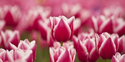 Tablouri cu flori personalizate si moderne