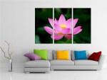 Multicanvas floare Lotus - cod E11