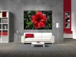 Poster floare rosie - cod AAA04