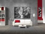 Poster tigru alb negru - cod DDD03