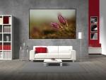 Tablou canvas flori in natura - cod A21