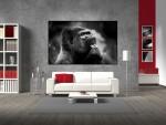 Tablou canvas gorila - cod G11
