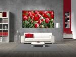 Tablou canvas lalele rosii - cod D07