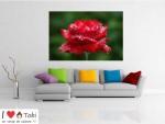 Tablou canvas trandafir rosu - cod L23