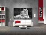 Tablou familie tigri albi - cod P08